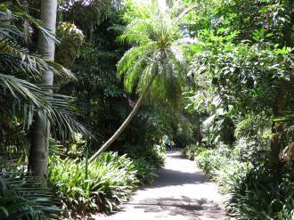 sun dappled palms