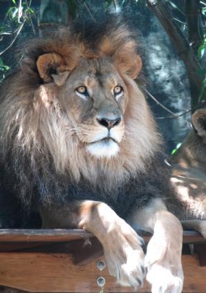 Taronga Zoo 136_2615x3728