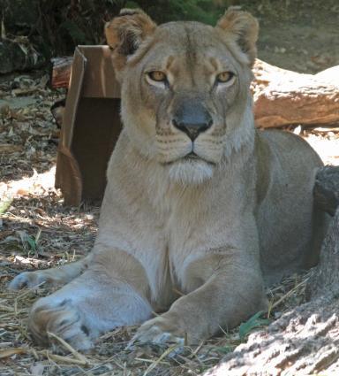 Taronga Zoo 162_2511x2784