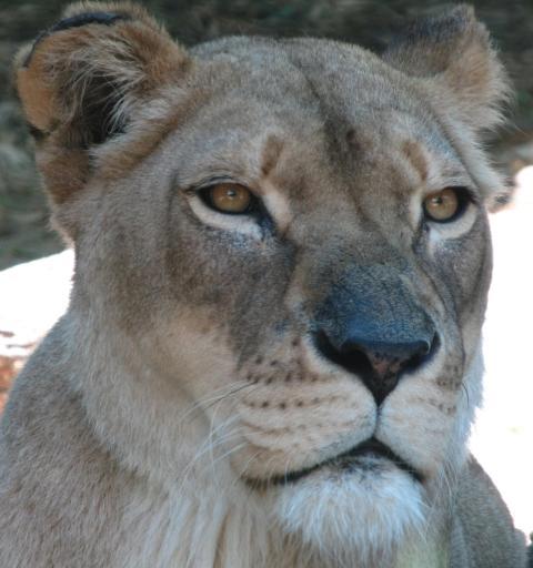 Taronga Zoo 164_2350x2502