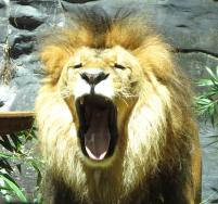 Taronga Zoo 187_1587x1492