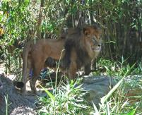 Taronga Zoo 192_2536x2063