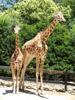 Taronga Zoo Sydney