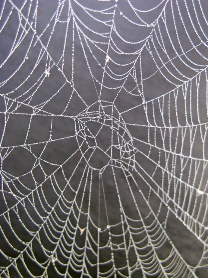 Spider's web bedecked with jewels of silver dew-drops.