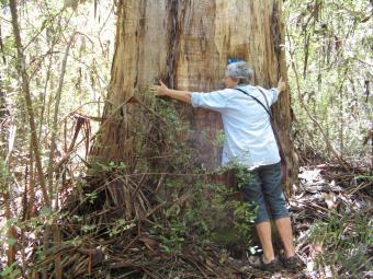 I am a tree hugger, I love trees