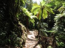 Punga forests