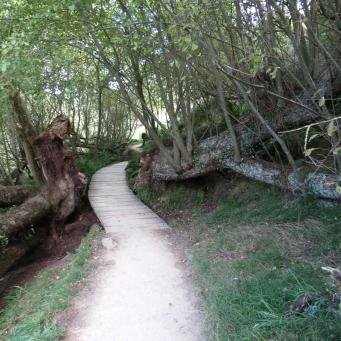 The path winds round through a woodland glen
