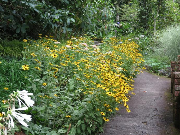 A herbaceous border spills it's cloud of yellow daisies over the path