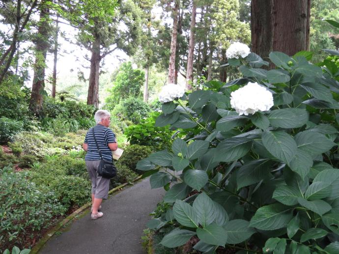 Kay admires a pure white hydranga