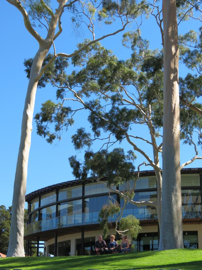 Tall gumtrees tower over the restaurant and souvenir shop