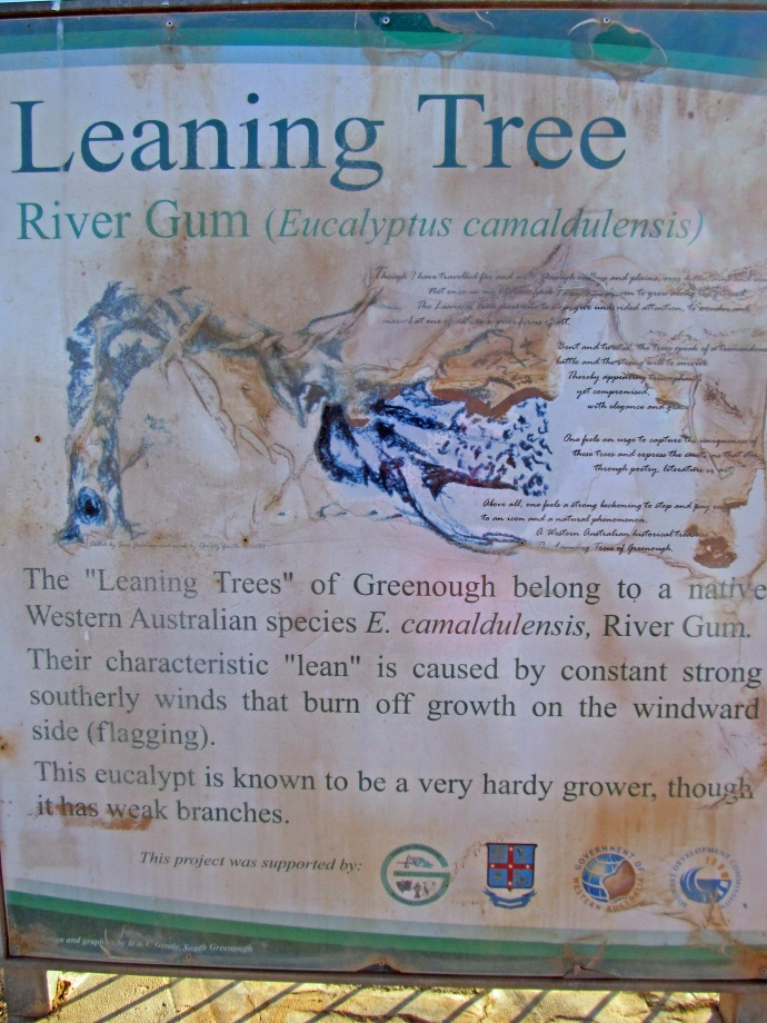 The information about the trees