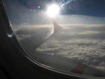 The sun glints on the wing of our bird.