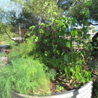 garden update 007_4000x3000