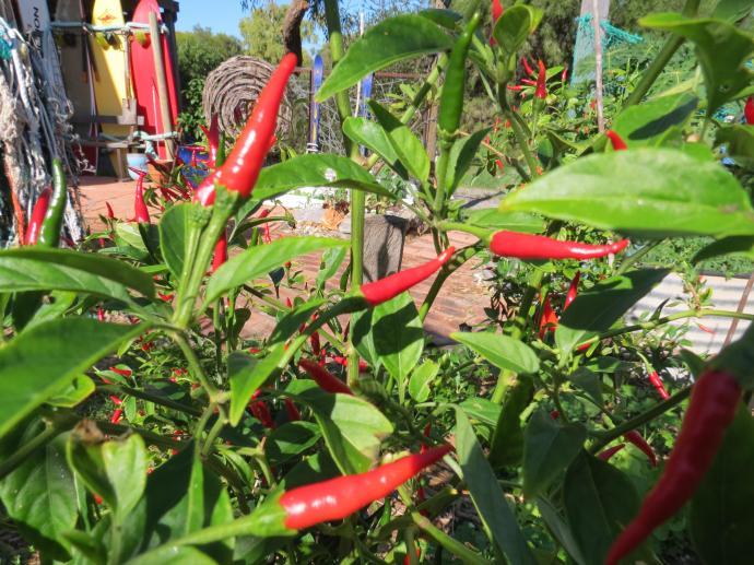 garden update 011_4000x3000