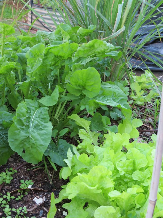garden update 021_3000x4000