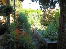Carroll's veggie garden