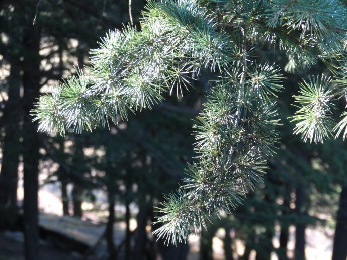 Arboretum PCsx40 231_4000x3000