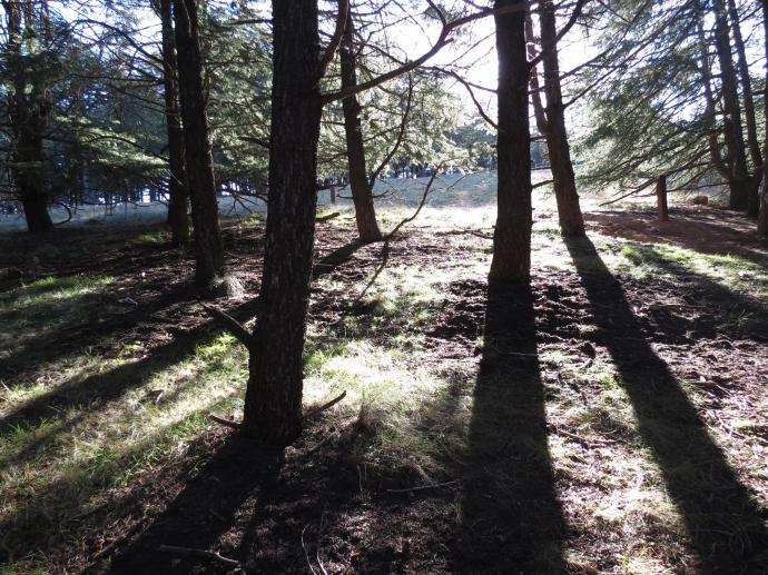 Arboretum PCsx40 234_4000x3000