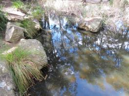 Botanic gardens 2 PC sx40 023_4000x3000