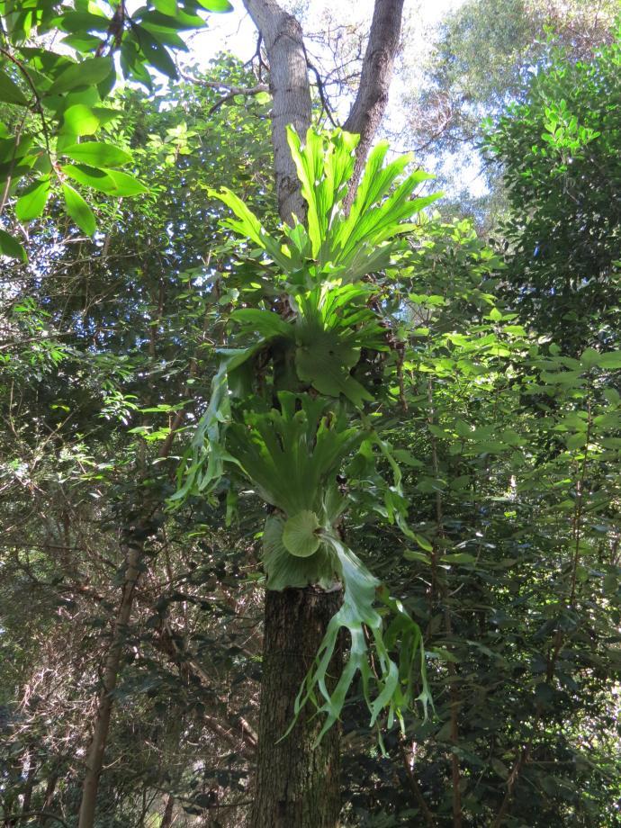 Botanic gardens 2 PC sx40 036_3000x4000