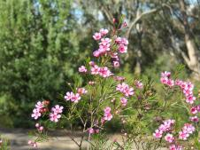 Botanic gardens 2 PC sx40 079_4000x3000