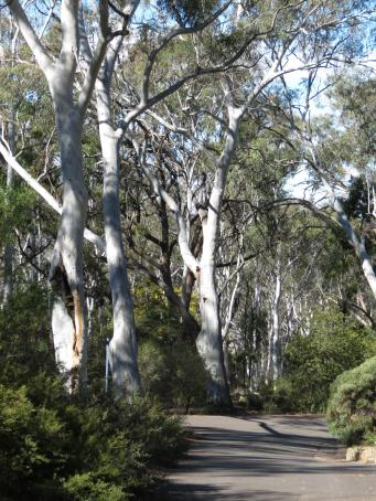 Canberra botanic gardens pc 076_3000x4000
