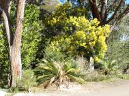 Canberra botanic gardens pc 083_4000x3000