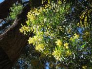 Canberra botanic gardens pc 098_4000x3000