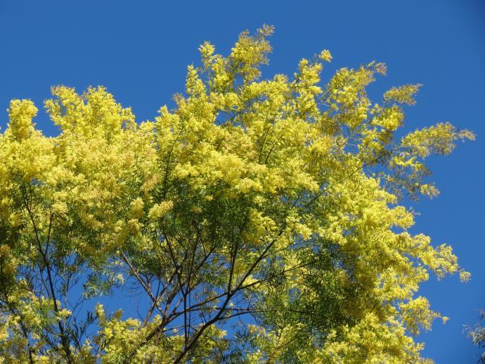 Canberra botanic gardens pc 108_4000x3000