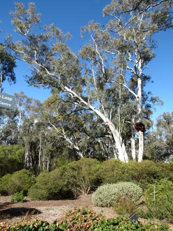 Canberra botanic gardens pc 128_3000x4000