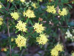 Canberra botanic gardens pc 131_4000x3000