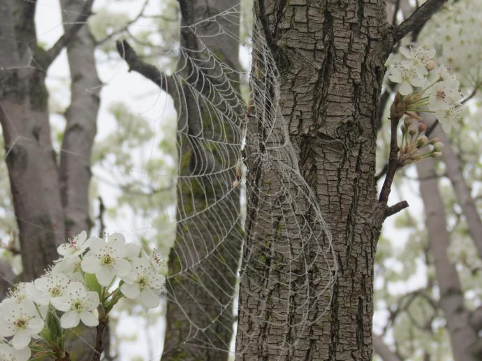 Dew sparkles like diamonds on the web