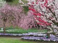 Some of the trees had pink and white blossom all on the same tree