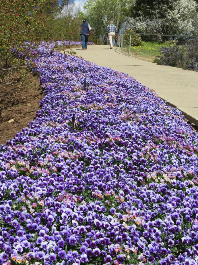 A bed of pansies line the walkway up the hill to the look-out point.