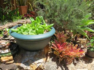 herb pots 001_4000x3000