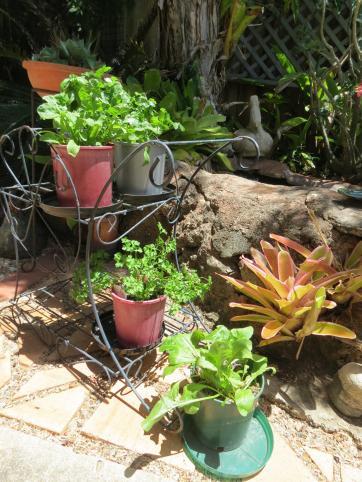 herb pots 002_3000x4000