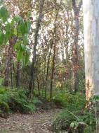 nature park walk pc 023_3000x4000