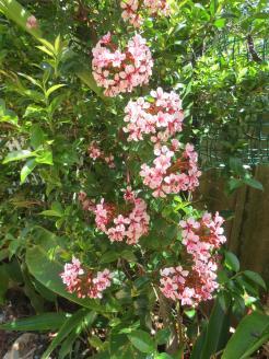 Oct 2014 garden pc 042_3000x4000