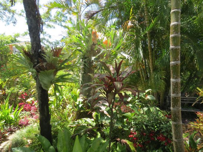 Oct 2014 garden pc 049_4000x3000