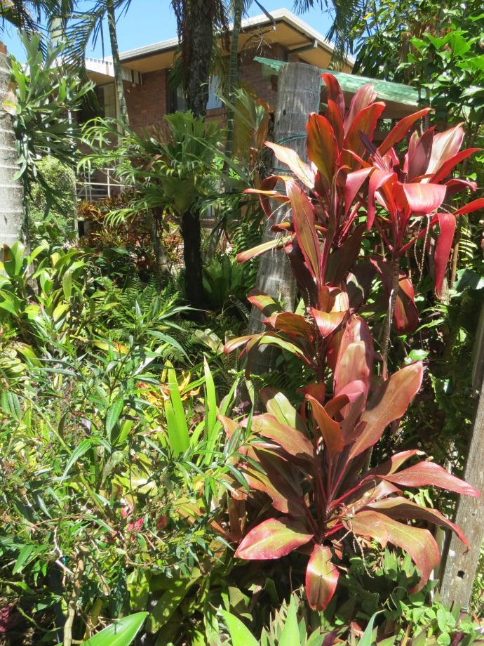 Oct 2014 garden pc 064_3000x4000