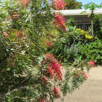Oct 2014 garden pc 076_4000x3000