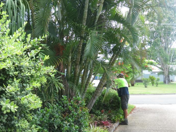 Big Jim tree cutting 017_4000x3000