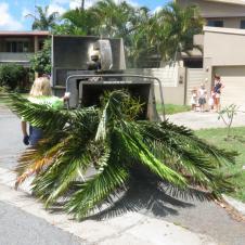 Big Jim tree cutting 021_4000x3000