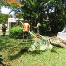 Big Jim tree cutting 029_4000x3000
