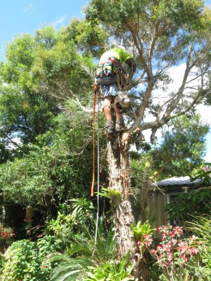 Big Jim tree cutting 037_3000x4000