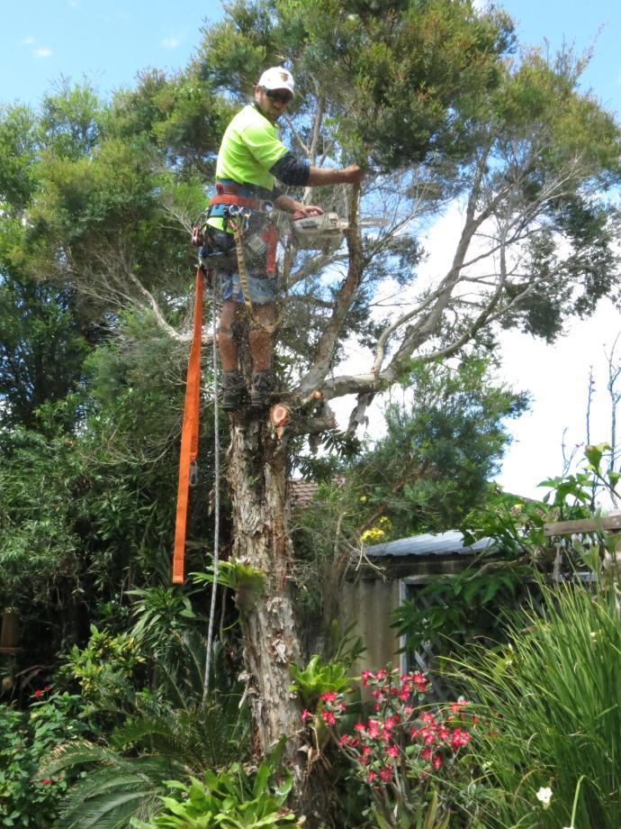 Big Jim tree cutting 039_3000x4000