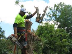 Big Jim tree cutting 047_4000x3000