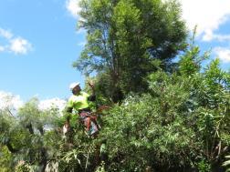 Big Jim tree cutting 052_4000x3000