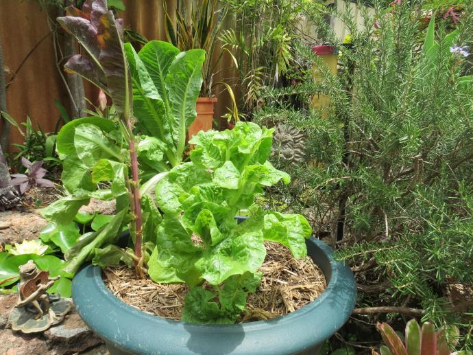 garden sx40 pc 042_4000x3000