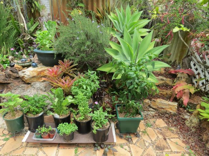 garden sx40 pc 044_4000x3000